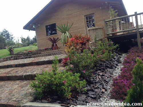 Viremam vivero producci n y venta de plantas ornamentales for Viveros plantas ornamentales colombia