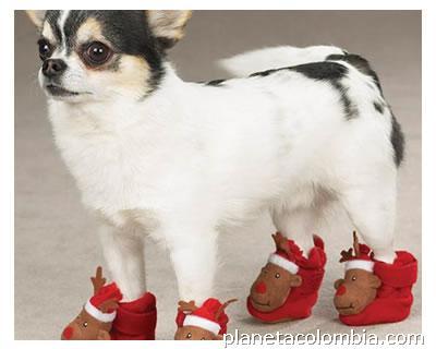 botas para perros bogota
