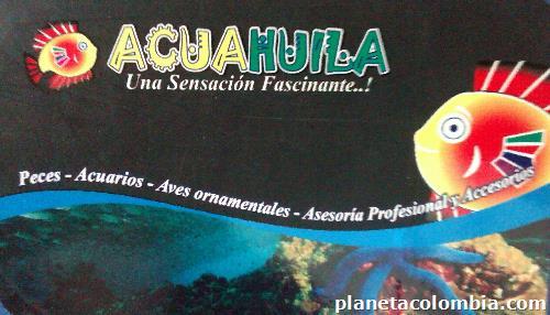 Fotos de acuarios peces ornamentales en neiva for Acuarios ornamentales