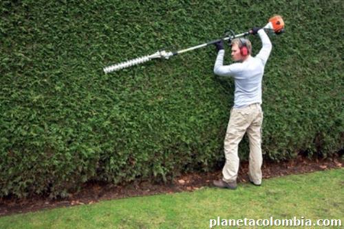 Fotos de limpieza de prados y jardines en mosquera for Limpieza de jardines madrid