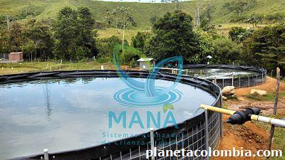 fotos de estanques para la producci n de trucha o tilapia